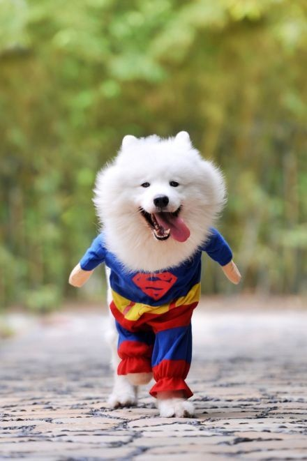 超人狗你好!~拯救世界的重任就交给你了~
