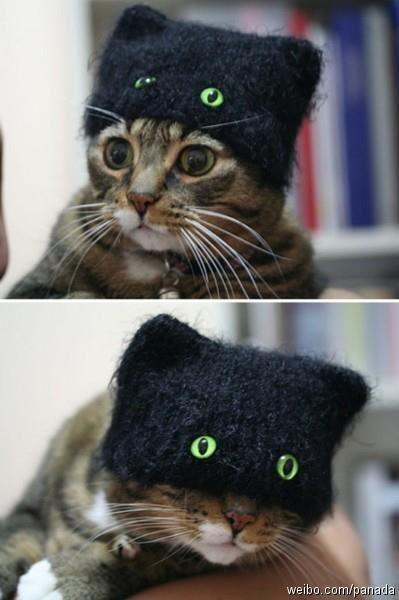 纯情小猫一秒钟变忍着,萌。。。