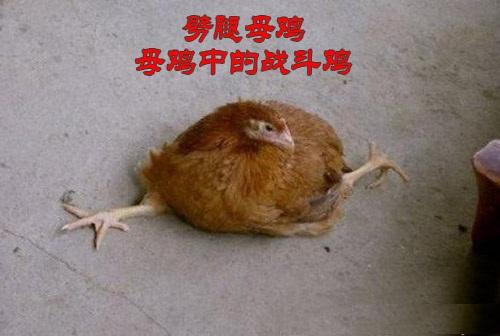 表弟上学骑自行车,放学回来的路上遇到一只老母鸡,心想万一撞死老母鸡得赔钱,然后决定绕过老母鸡,可是没看清楚旁边路上有石子,然后连人带车摔倒了,最后还骨折去医院了。小表弟说:摔倒的时候,还是压死老母鸡了!