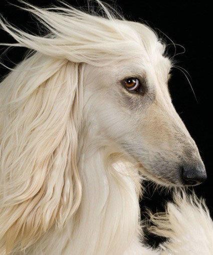 你才是马呢,你全家都是马!没见过这么飘逸的狗狗啊!!
