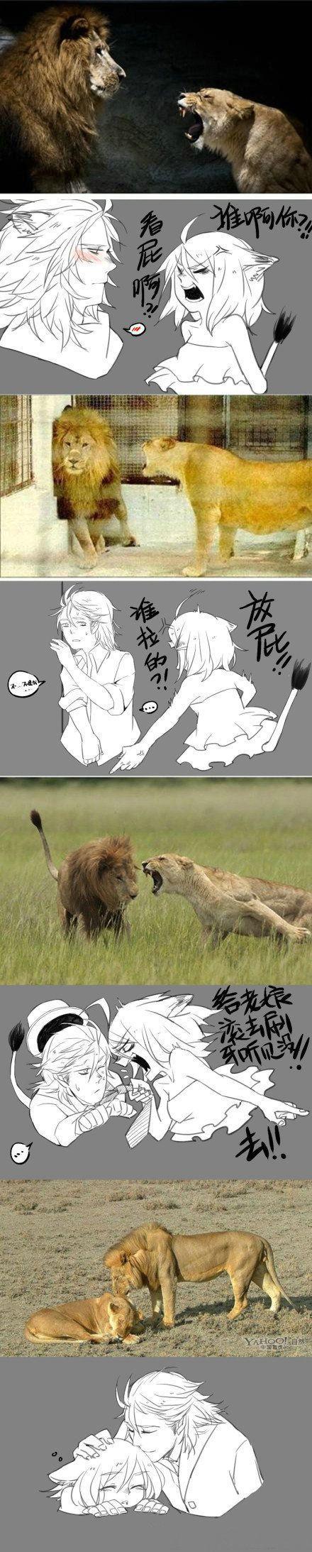 【男人本该如此】狮子拟人,暴娇狮子娘和隐忍狮子王。( 波液就是BOYER)