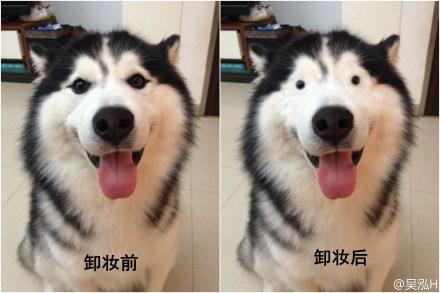 小哈如果没有眼线...(via 吴泓H)