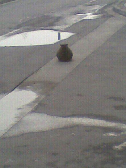 还以为是哪个食堂把大瓦罐摆在路中间了。。。。。。。。。。。原来是只猫。。。。。。。。