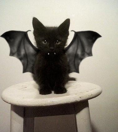 这样的黑暗小恶魔,你是该喜欢呢,还是该讨厌呢 ?