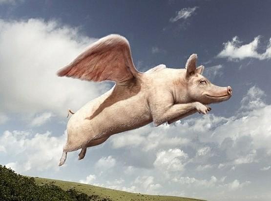 快来看啊。。。天使家的猪飞出翔了!