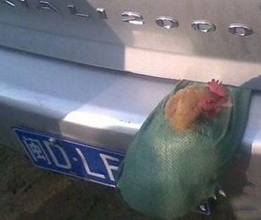 车主涉嫌故意遮挡号牌,罚2000扣6分,鸡没收!