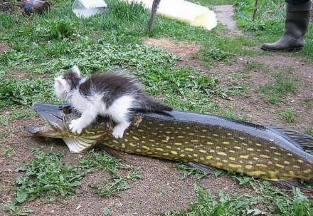 幸福就是奥特曼打小怪兽,狗吃肉,猫吃…… wait 你这是抓了个神马东西啊???