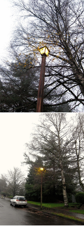 国外一处路灯因为故障24小时都不会灭,结果导致附近的树叶到了冬天都还没有掉