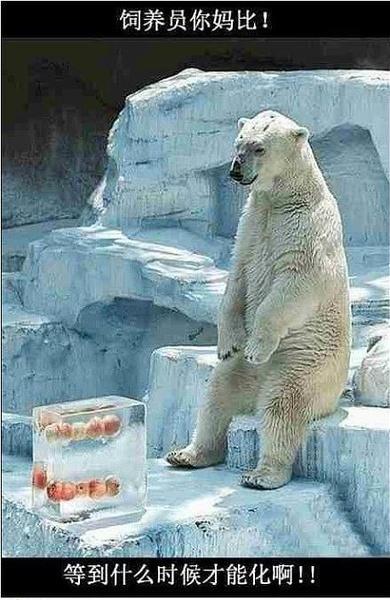 为了让北极熊有家乡的感觉吧!
