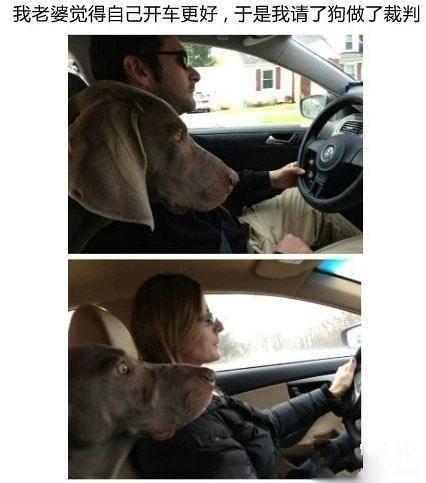 我老婆觉得自己开车更好,于是我请了狗做裁判。