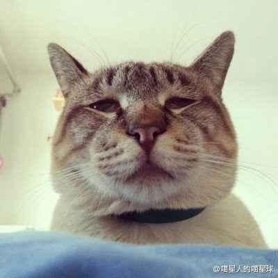 最近网络上很火的一只猫。主人语:睡醒一睁开眼就见到这货的嘴脸。大爷的,你是来遗体告别呢!