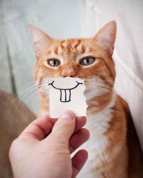生活就是要这种态度,牙再大,也要笑!