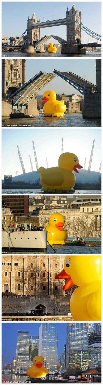 【门前大桥下,游过一只鸭】当地时间11日早,英国泰晤士河上惊现一只高达50英尺(约15米),重约半吨的巨型浴盆橡皮鸭!伦敦塔桥甚至为它折起!这只大鸭子由8个人花了800多个小时制作,目的只是为了让英国人笑一笑!因为英国的成年人现在平均每天笑7.2次,而心理学家建议每天应该发笑15次.
