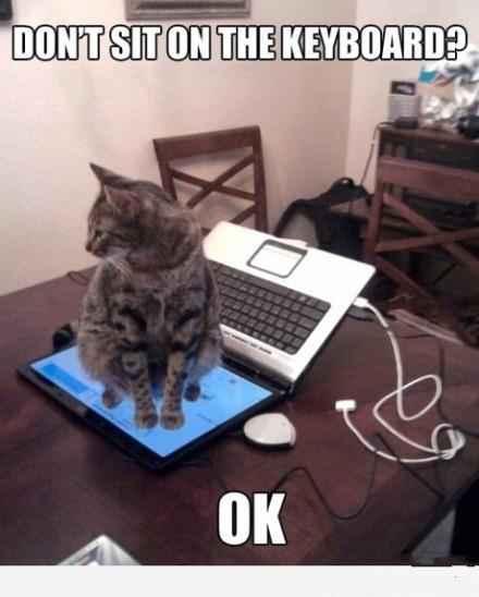 主人:不准坐到键盘上!! 喵星人:好哒!
