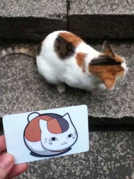 学校里的猫,背上的颜色要是反过来就好了啊啊啊啊啊!!!!娘口三三!!!!!!(via Rayuu辣油)