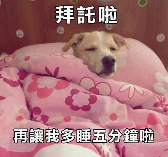 拜托啦,再让我多睡5分钟