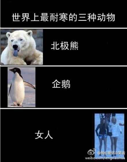 世界上最耐寒的三种动物。。。[转]