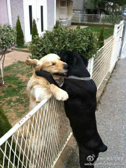 阔别重逢的两只汪星人竟然。。隔着围栏深情地拥抱了,拥抱了,拥抱了。。。ヽ(;▽;)ノ