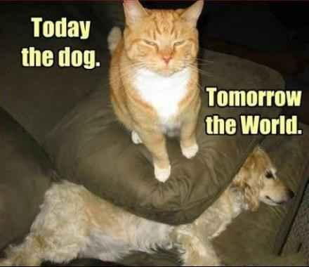 今日征服汪星人,明日便是全世界!
