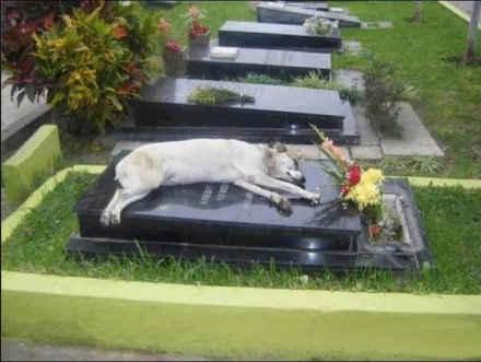 狗狗capitan在主人2006年丧礼时失踪,家人近期扫墓发现它睡在墓碑。据管理人员说,它六年来每天6pm来墓碑休息!「Lolo陈新 转自facebook」