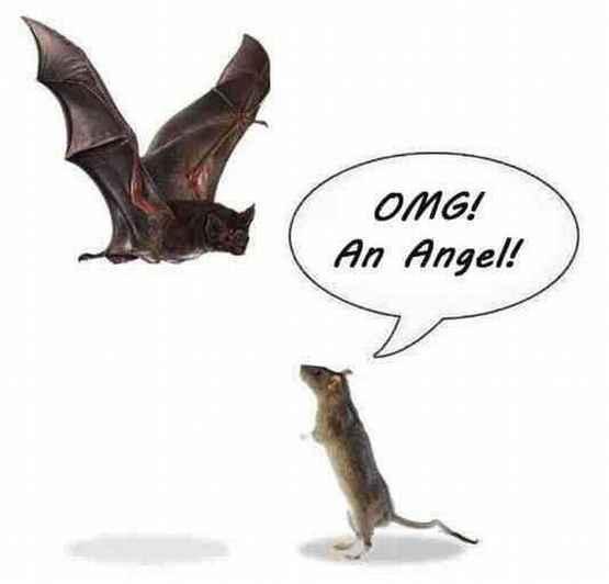 当老鼠遇上蝙蝠。。。~