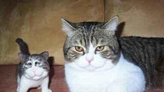 我三歲的妹妹指著那隻小的説:看那隻傻貓
