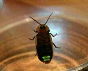 刚逮了一只萤火虫,就剩两格电了,怎么充电?