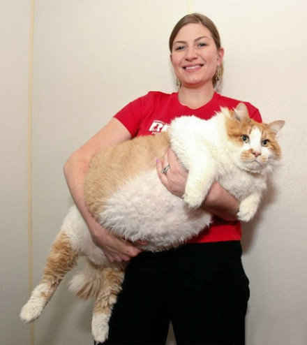 肥的流油的肥猫,吃啥长大的?