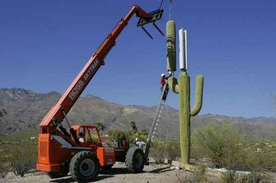 亚利桑那州的手机信号塔是长成这样的...