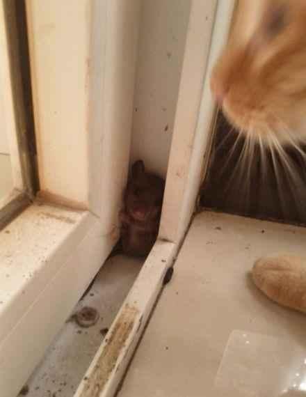 丫的,别以为我找不到你!~
