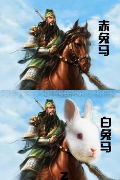 哈哈哈哈哈哈哈 兔子好萌