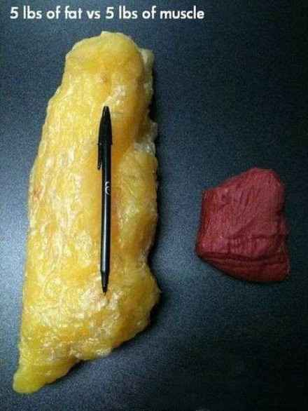5磅脂肪和5磅肌肉的对比,这绝对是我今年来看过的最最最震撼励志的图……