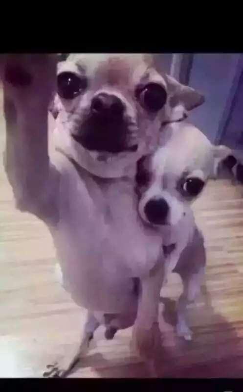 狗都一对一对的了,你呢?
