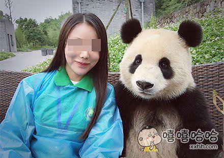 一只镜头感极好的熊猫!