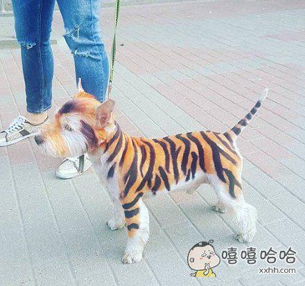 快说你是老虎还是汪星人啊