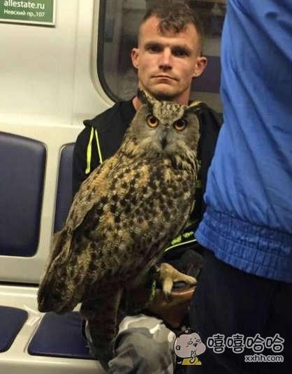 看什么,没看过猫头鹰坐地铁啊