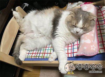 喵喵,你睡觉的姿势也太豪放了吧!