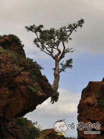 一棵励志的树