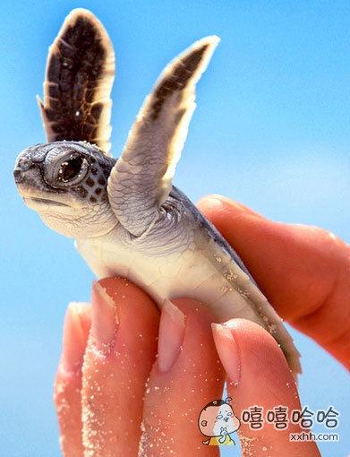 小海龟:我要飞得更高!