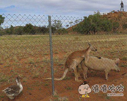 澳大利亚内陆地区是一片荒芜而孤寂的土地,这也造就了一些别样的情侣!