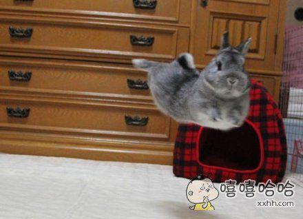 嫦娥,你家兔子喊你去奔月!