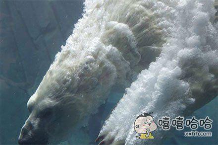 北极熊入水的瞬间
