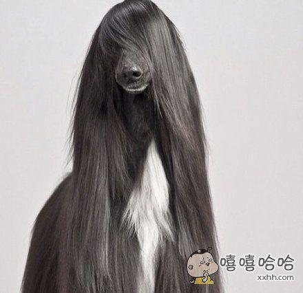 看我的新发型,漂亮嘛?