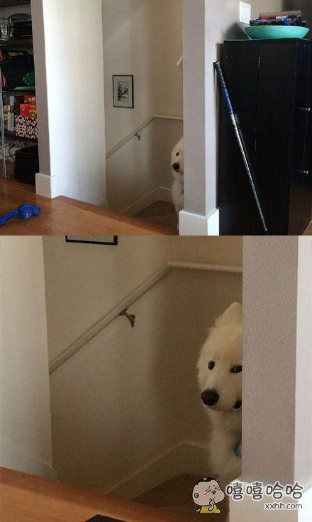 网友说,他因为狗狗翻垃圾桶揍了狗狗,之后的一天叫狗狗它都不理人了,于是他拿出了一袋零食慢慢撕开了包装,往楼梯口一看……
