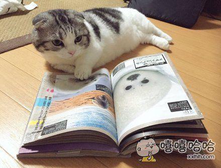 岛国一主人表示,自家猫咪酷爱看这本动物图册,一读就不放手…貌似是想多看明星造型,学习如何成为一名网红