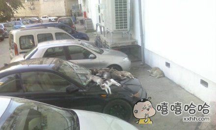 网友感慨,自己的车独得恩宠,劝猫大爷们也雨露均沾啊…