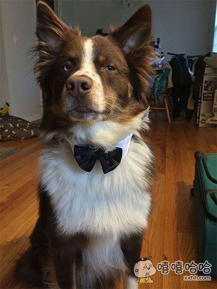 我是一只绅士汪!不和你一般见识!