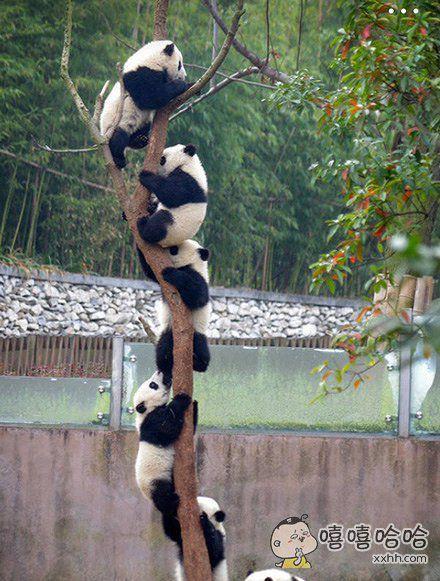 看到一网友给我们大成都国宝取名叫【熊猫串串香】