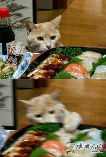 我就吃一口!喵