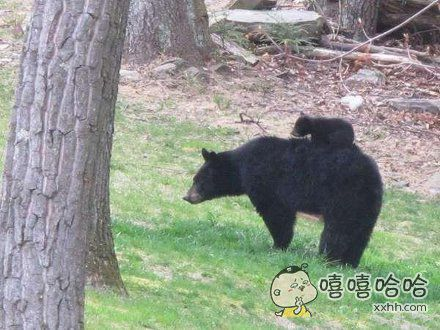 谁看到我家熊孩子了